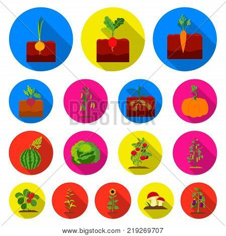 Plant, vegetable flat icons in set collection for design. Garden and harvest vector symbol stock  illustration.