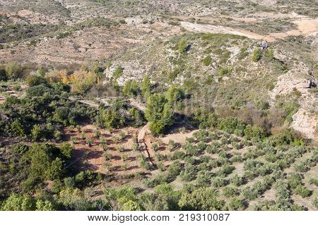 Mountain Olive Groves