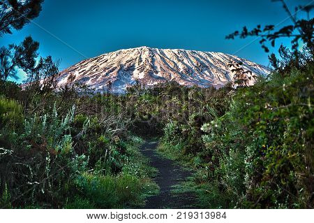 Africa, Tanzania, Kilimanjaro national park. Climbing to Uhuru peak - highest point of Kilimanjaro mountain and African continent.