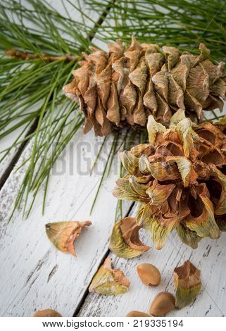 Spruce resinous husked pine-cones with pine nuts, needles and pine branches on white wooden rustic background