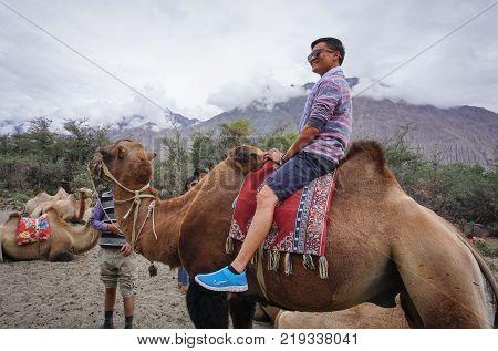 Ladakh India - Jul 19 2015. Camel safari in Nubra Valley Ladakh India. Nubra is a tri-armed valley located to the north east of Ladakh valley.
