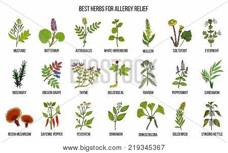 Best herbs for allergy relief. Hand drawn vector set of medicinal plants