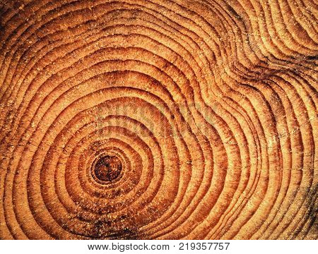 abstract nature background annular rings on spruce wood