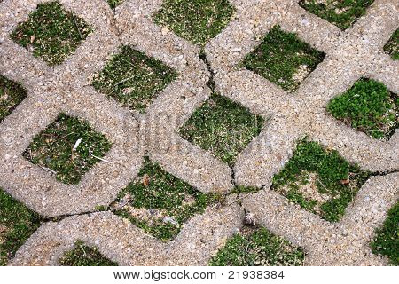 Lawn growing in Pavers