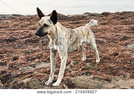 Wild dog standing on a beach shore which was covered with algae.