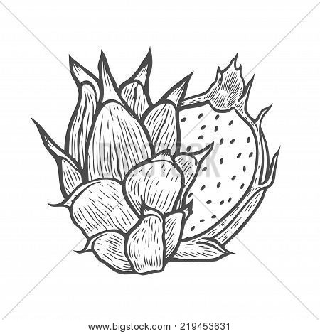 Pitaya Hand drawn Sketch of tropical dragon fruit. Exotic pink pitahaya fruit with green leaves on the top. Tropical cocktail recipe, juice dessert smoothie packaging pitaya design