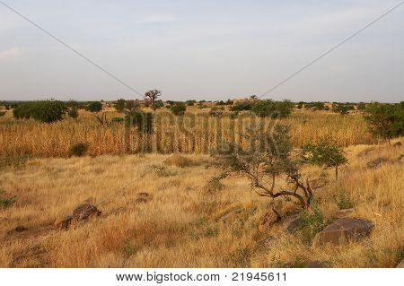 A view of African savanna