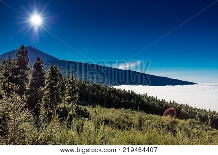 Corona Forestal Natural Park, Tenerife, Canary Islands - Massive forest positioned at a high altitude above the clouds, surrounding the Teide volcano, great for hiking amid mountains and wildlife.