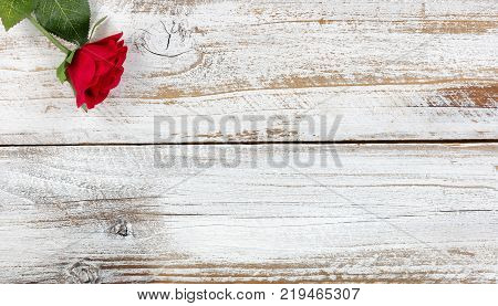 Single red rose resting on rustic white wood in flat lay view