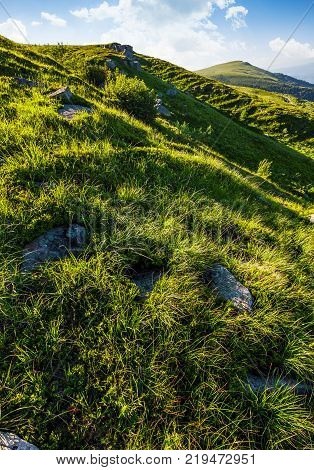 grassy of mountain in summertime. lovely nature background