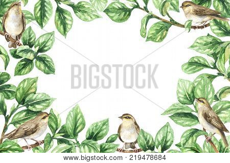 Watercolor painting. Hand drawn horizontal rectangle frame made with songbirds tree branches and green leaves. Floral decorative border with plants and forest birds.