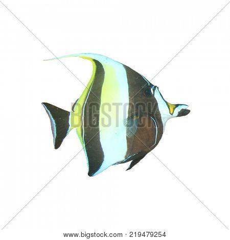 Moorish Idol fish isolated on white background