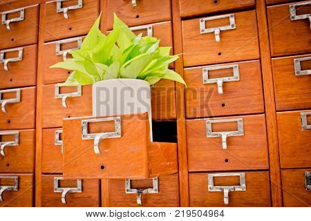 Tree on Open wooden cabinet boxes in Library or Filing archive reference card catalog. Knowledge base and education concept; Selective focus; Tree on Open wooden cabinet boxes in Library or Filing archive r;