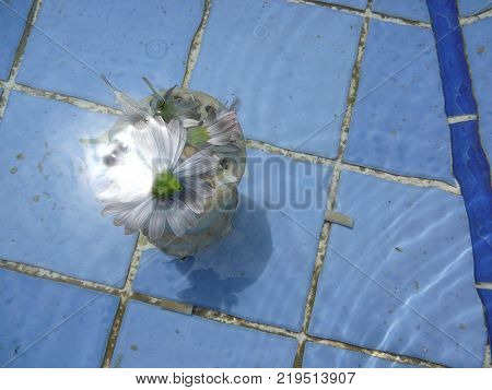 Blue Delicate flower submerged in village fountain