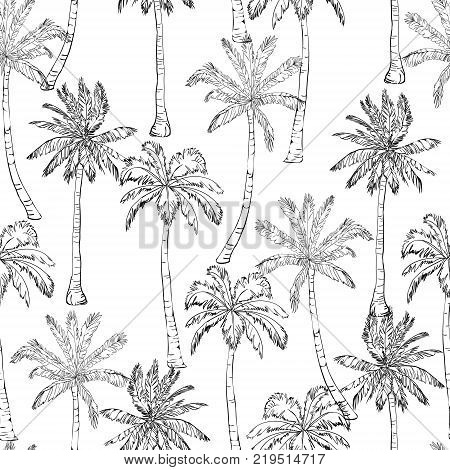 Seamless tropical palms pattern. Summer endless hand drawn vector background of palm trees can be used for wallpaper, wrapping paper, textile printing.Vector illlustration. foliage, natural, tropic, aloha, banana, botanical, eco, green, liana, miami, orna