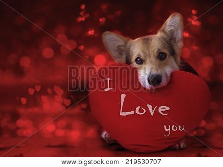 Happy Valentine's Day my love. Lovely loving dog with a red heart.