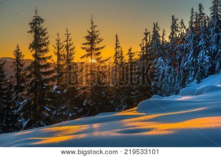 Sunlit forest and snow. Sunset scene in mountains.