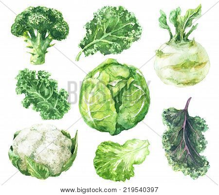 Hand drawn raw food illustration. Watercolor cauliflower broccoli kale kohlrabi and salad leaf isolated on white background. Variety cabbages set.