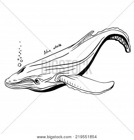 Hand-Drawn Doodle of whale. Vector Illustration. Stock vector.