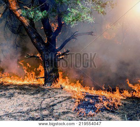 A bushfire burning orange and red at night.