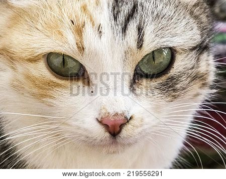 the most beautiful cat eyes, closely the eyes of the cat, different and original cat pictures