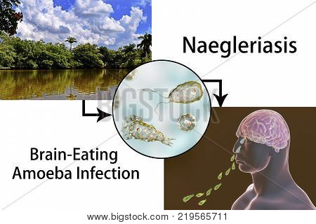 Brain-eating amoeba infection, naegleriasis. Image shows water reservoir as a potential source of infection, 3D illustration of Naegleria fowleri parasite and nasal passage of amoebas to brain