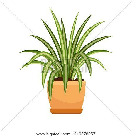Chlorophytum house plant in flower pot, vector icon on whote background