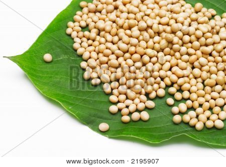 Soy Beans On Leaf Isolated On White.