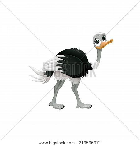 Ostrich cartoon character. Cute ostrich flat vector isolated on white background. African or australian fauna. Ostrich icon. Animal illustration for zoo ad, nature concept, children book illustrating