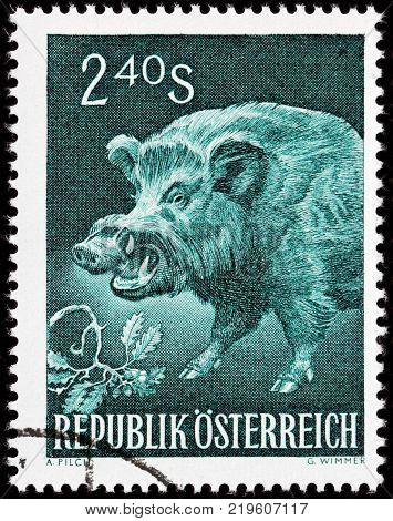 LUGA RUSSIA - AUGUST 20 2017: A stamp printed by AUSTRIA shows Wild Boar also known as the wild swine or Eurasian wild pig circa 1959