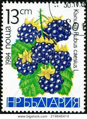 Ukraine - circa 2017: A postage stamp printed in Bulgaria shows drawing Blackberry Rubus caesius. Series: Fruits. Circa 1984.