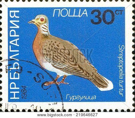 Ukraine - circa 2017: A postage stamp printed in Bulgaria shows drawing Bird European Turtle Dove Streptopelia turtur. Series: Birds. Circa 1984.
