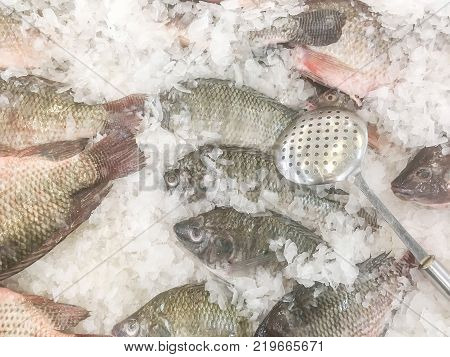 Closeup stainless sieve on pile of raw freeze dead fish for cook in tray with ice textured background with copy space