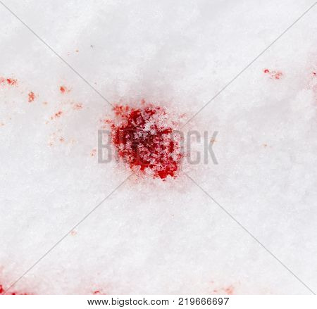 red blood on the snow . Photo of an abstract texture