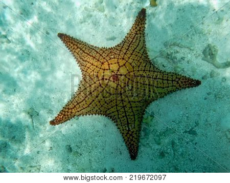 Snorkeling photography - an isolated orange starfish in crystalline water (Los Roques Archipelago, Venezuela).