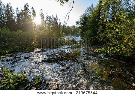 Mountain River In Summer. Bialka River, Poland