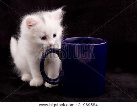 Nice  Kitten On A Black Background