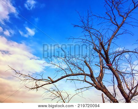 Tree Branches without Leaves on Vivid Blue Sky