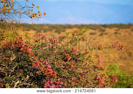Plants and flowers overlooking golden grasslands on an arid plain in Central California