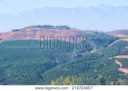 Hills covered with Avocado and Orange Groves surrounded by mountainous terrain taken in Simi Valley, CA