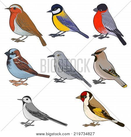vector set of birds, hand drawn songbirds, isolated vector elements