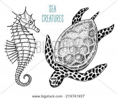 sea creature cheloniidae or green turtle and seahorse. engraved hand drawn in old sketch, vintage style. nautical or marine, monster or food. animals in the ocean