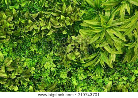 green vegetation of grass and leaves on branches