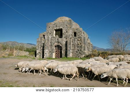 a flock of sheep and the Cuba of S. Domenica in Castiglione di Sicilia, Sicily