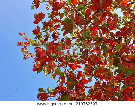 Orange Brown and Green Leaves and branches with blue sky background