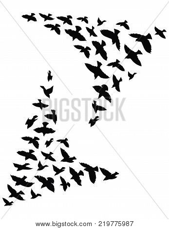 Silhouette of a flock of birds. Black contours of flying birds. Flying pigeons.
