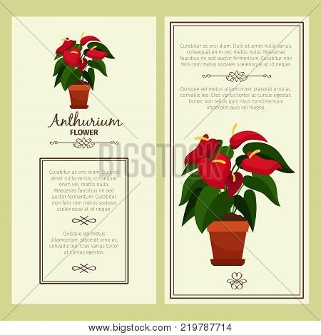 Anthurium flower in pot vector advertising banners for shop design