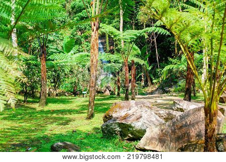 Enviroment of forest with big rock and green field, beautiful national in tropcial park,Chiangmai north of Thailand.
