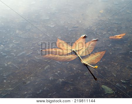 a yellow leaf from the tree in the puddle