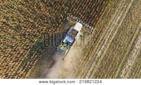Harvester harvests corn. Collect corn cobs with the help of a combine harvester. Ripe corn on the field